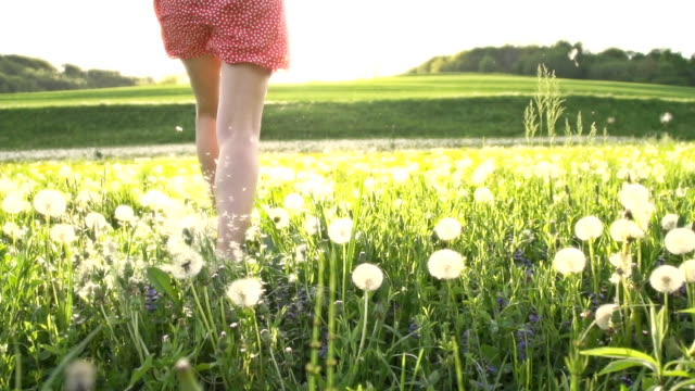 hd super slow mo: woman running toward the sun - wildflower stock videos and b-roll footage