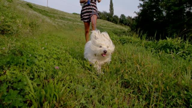 SLO MO mulher correr com Coton de Tulear