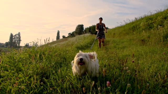 stockvideo's en b-roll-footage met slo mo woman running with dog - huisdier