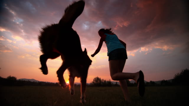 SLO MO Woman running with her dog in the meadow at sunset
