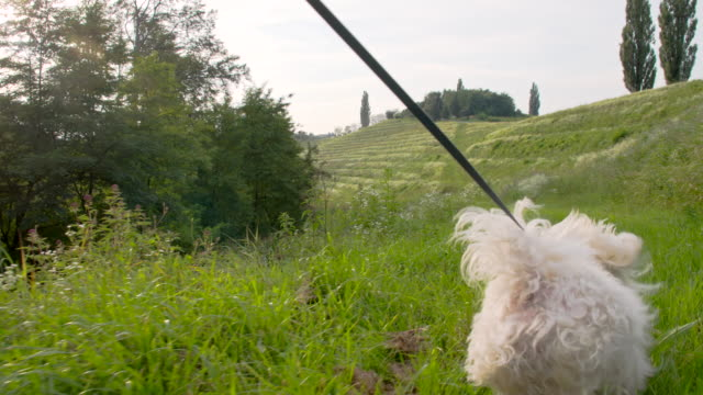 WS mulher correr com o seu cão