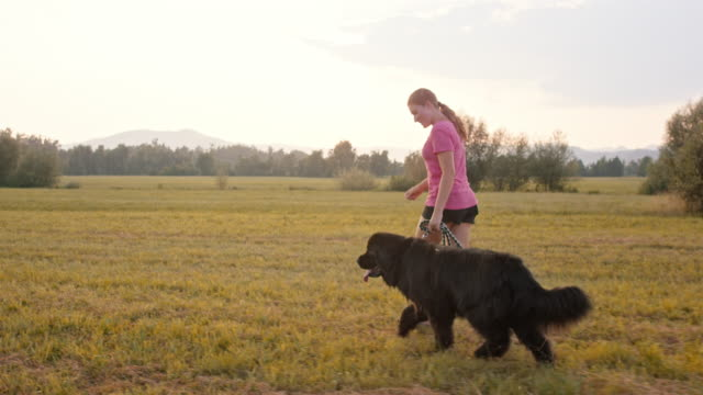 SLO MO TS Woman running with her Newfoundland dog in the sunny meadow