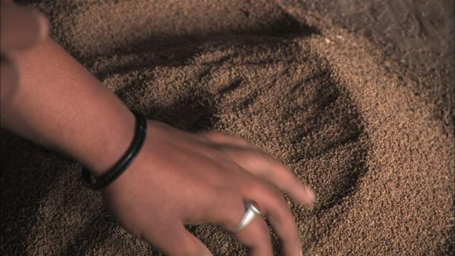 vídeos y material grabado en eventos de stock de a woman runs her hands through rice. - cereal plant