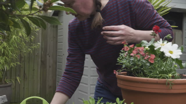 woman scooping compost into plant pot in city garden. - shed stock videos & royalty-free footage