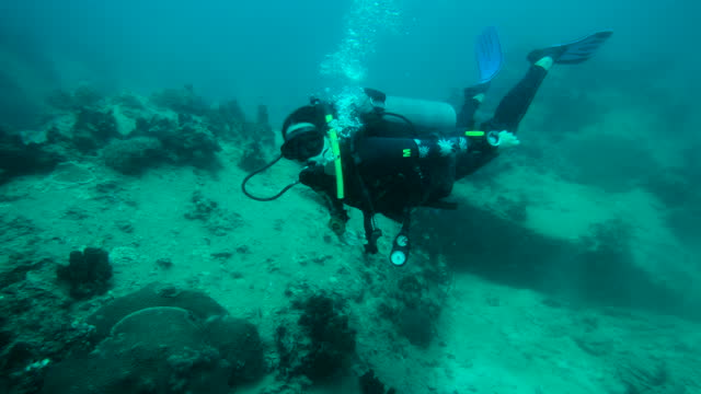 woman scuba diver diving under water - diving flipper stock videos & royalty-free footage