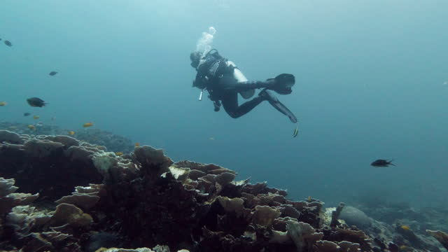 woman scuba diving in deep blue sea thailand - coral stock videos & royalty-free footage