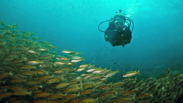 woman scuba diving swimming through school of tropical fish - aqualung diving equipment stock videos & royalty-free footage