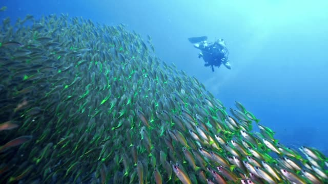 woman scuba diving with school of tropical fish happiness in nature - aqualung diving equipment stock videos & royalty-free footage