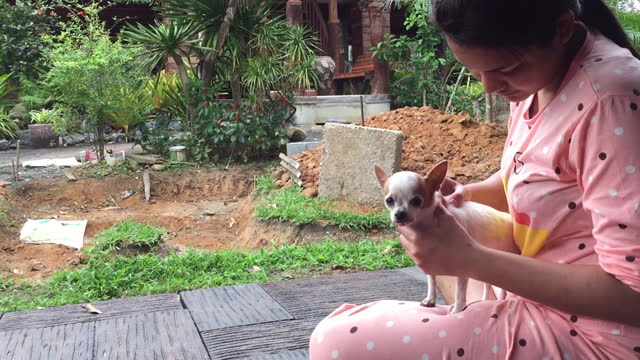 kvinna som sitter i trädgården med chihuahua hund - knähund bildbanksvideor och videomaterial från bakom kulisserna