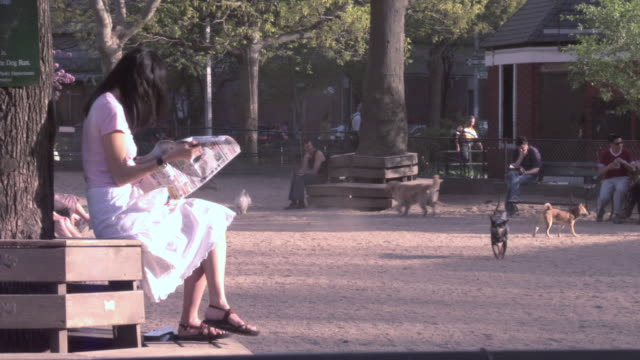 ws woman sitting on a bench at the dog park reading a news paper / new york, new york, united states - off leash dog park stock videos & royalty-free footage