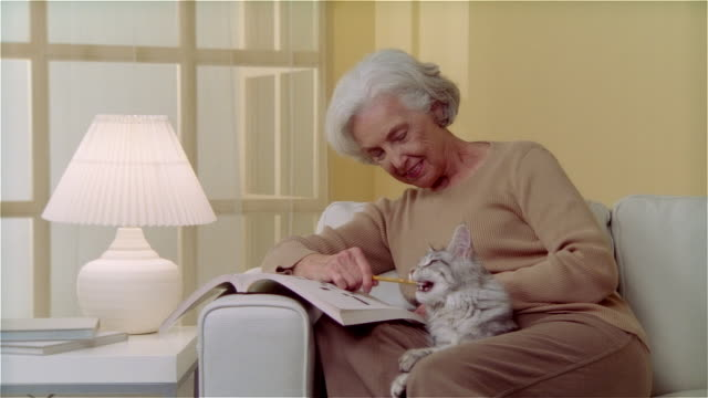 ms woman sitting on couch and doing crossword puzzle while holding maine coon cat - crossword stock videos and b-roll footage