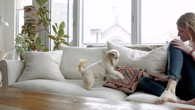 woman sitting on couch with her pet dog - sofa stock videos & royalty-free footage