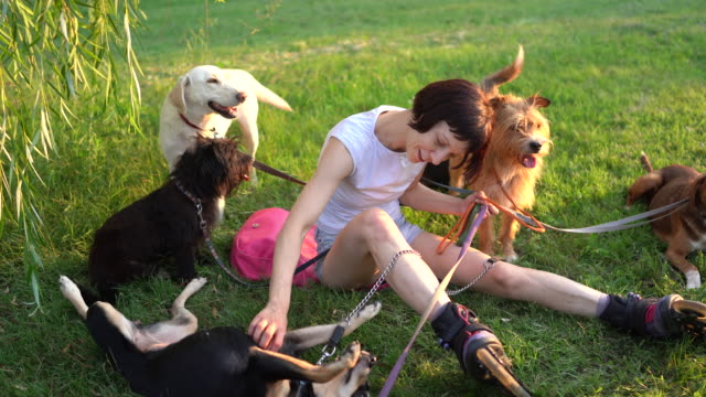 woman sitting on grass in public park with her dogs and enjoying sunset - side hustle stock videos & royalty-free footage