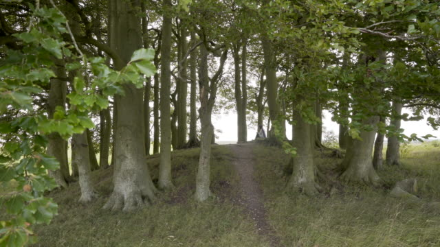 a woman sitting under the beech trees on one of the avebury barrows - tomb stock videos & royalty-free footage
