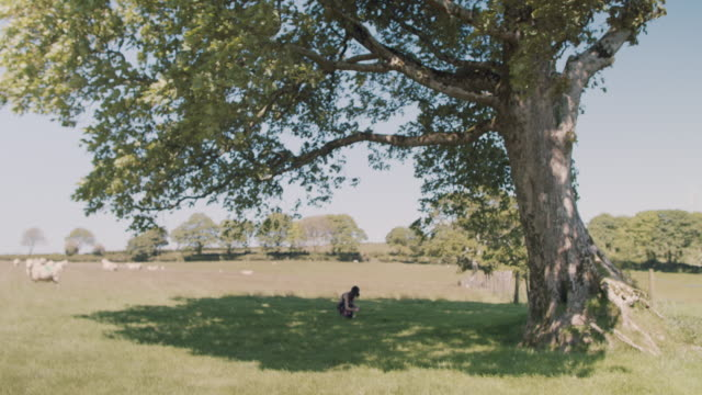 woman sitting/laying in shade under single tree in pasture in summer - shade stock videos and b-roll footage