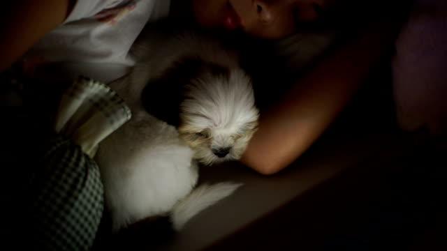 vidéos et rushes de femme allongée avec chiot dans le lit - être à l'aise