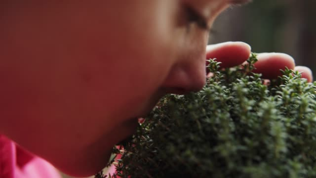 woman smelling fresh herbage. - kräuter stock-videos und b-roll-filmmaterial