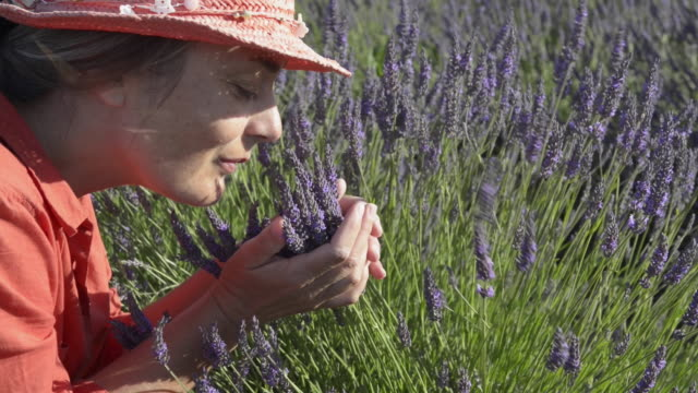 a woman smelling lavender in field - only mid adult women stock videos & royalty-free footage