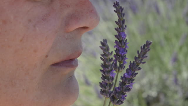 a woman smelling lavender in field - 植物 ラベンダー点の映像素材/bロール