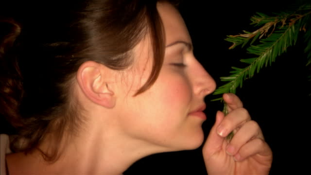 zi, cu, woman smelling sequoia branch, side view, ragged point, california, usa - ragged point stock videos and b-roll footage