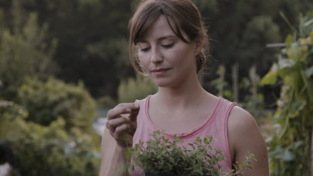 Woman smells and tastes leave of oregano potted plant, standing in allotment