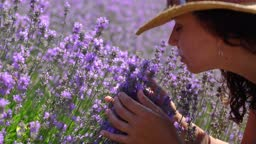 Woman smells lavender flowers on the lavender field in the rays of the setting sun.