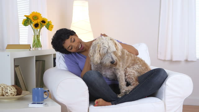 vídeos de stock, filmes e b-roll de woman smiling and petting dog - só uma mulher de idade mediana