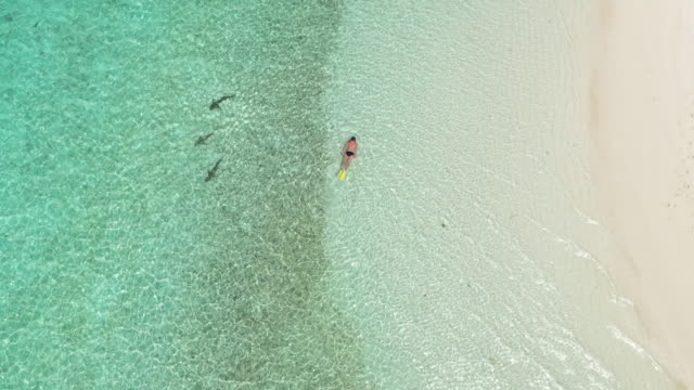 a woman snorkeling in clears waters off the coast of australia. - snorkelling stock videos & royalty-free footage
