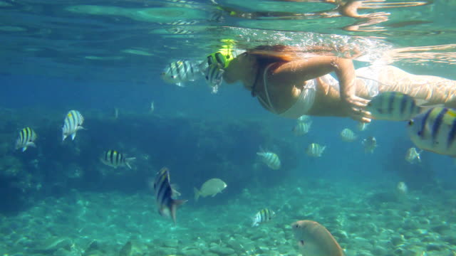 woman snorkeling in the red sea. - underwater diving stock videos & royalty-free footage