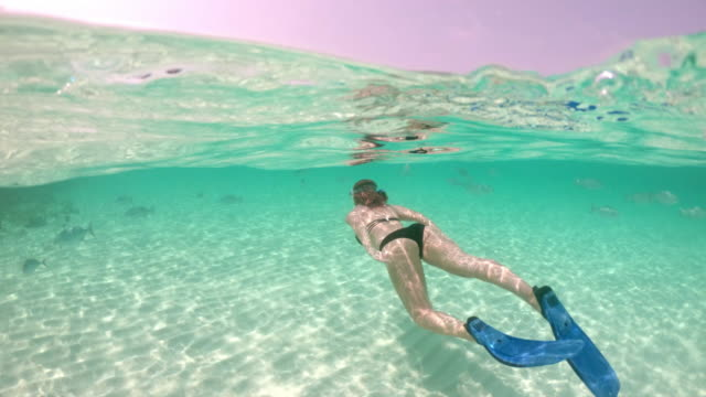 ms woman snorkeling in tropical ocean,maldives - diving flipper stock videos & royalty-free footage