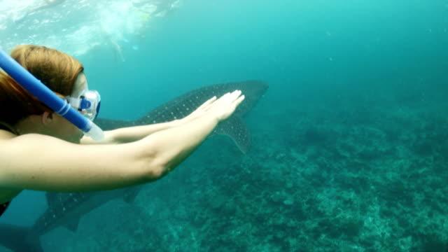 ms-woman mit walhai im tropischen ozean schnorcheln - walhai stock-videos und b-roll-filmmaterial