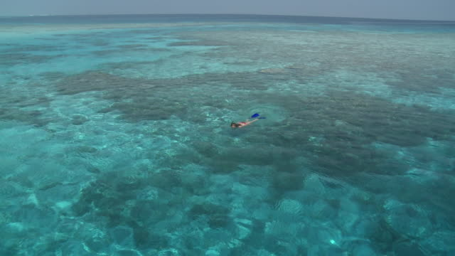 Woman snorkelling in clear, blue waters, view from boat, ZI, Vaavu Atoll, The Maldives