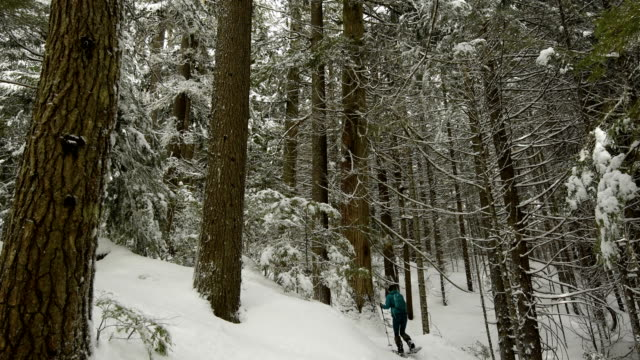 Frau in einem verschneiten Wald Schneeschuhwandern