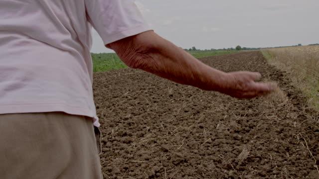 vidéos et rushes de ts femme semer les graines - cereal plant
