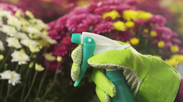 Woman spraying flowers
