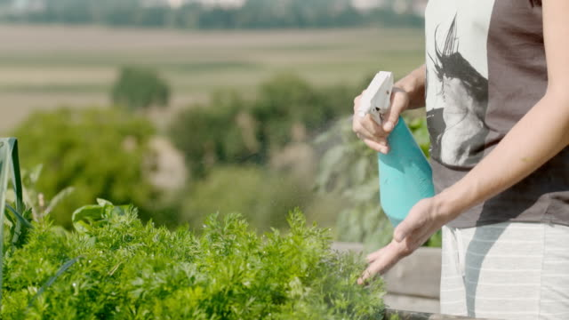 slo mo woman spraying fresh parsley in the garden - front or back yard stock videos & royalty-free footage