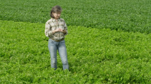 ms woman standing in green field, inputting data in portable device - one mid adult woman only stock videos & royalty-free footage