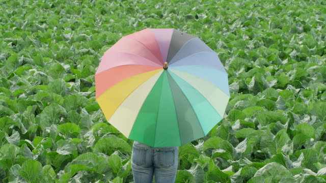 vídeos de stock, filmes e b-roll de ms woman standing in green field twirling rainbow colored umbrella - chapéu
