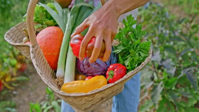vídeos y material grabado en eventos de stock de slo mo mujer de pie en el jardín colocando pimientos rojos en una cesta - huerto