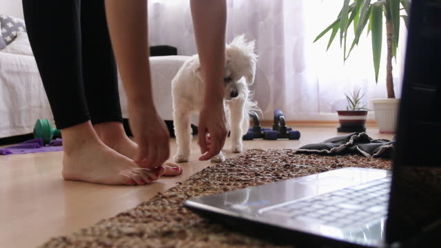 woman stretching and watching online training on laptop with her dog at home - leggings stock videos & royalty-free footage