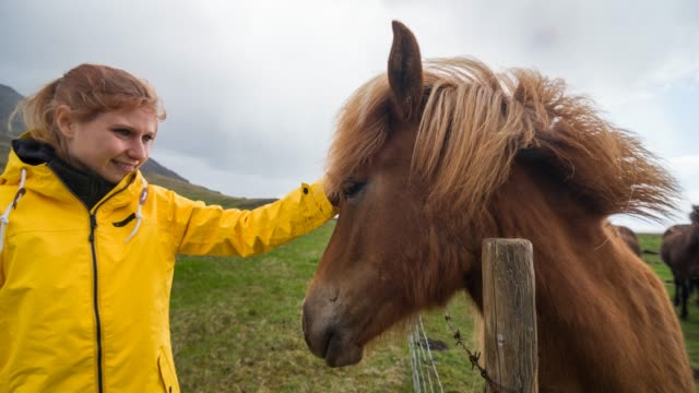 woman stroking a horse in the wild - stroking stock videos & royalty-free footage