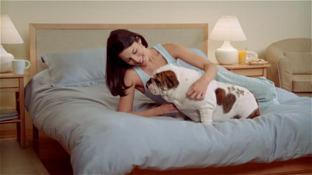 ms, zi, zo, woman stroking bulldog on bed - nightwear stock videos & royalty-free footage