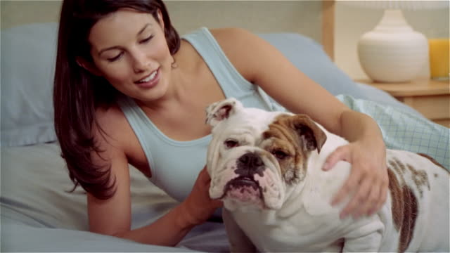 cu, ms, woman stroking bulldog on bed - nightwear stock videos & royalty-free footage