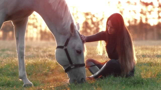 slo mo woman stroking her white horse eating grass - pasture stock videos & royalty-free footage