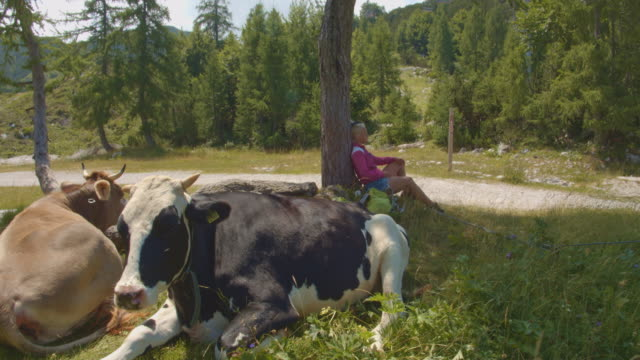 stockvideo's en b-roll-footage met slo mo vrouw omringd met alpiene koeien - julian alps