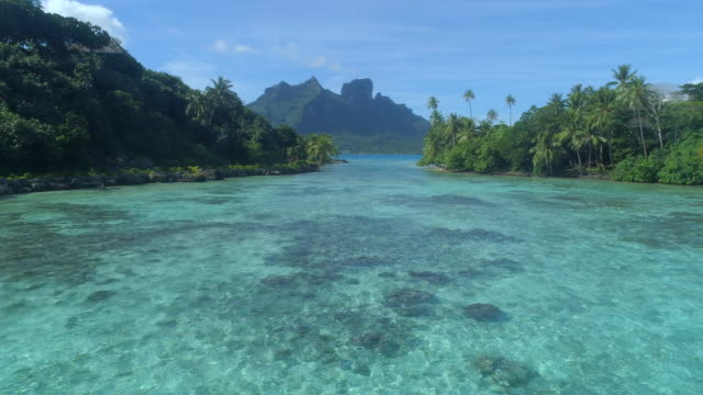 a woman swimming in a tropical green lagoon in bora bora tropical island. - utebassäng bildbanksvideor och videomaterial från bakom kulisserna