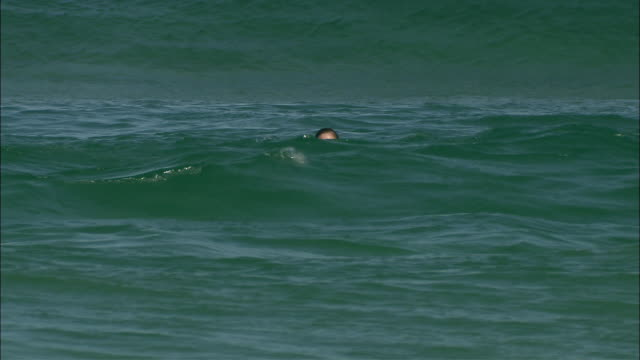 ws woman swimming or drowning in ocean, sydney, new south wales, australia - drowning stock videos and b-roll footage