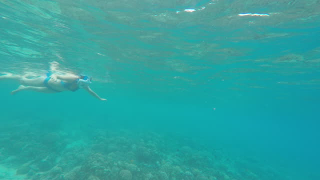 a woman swims snorkeling over the coral reef of a tropical island - tahaa island stock videos & royalty-free footage