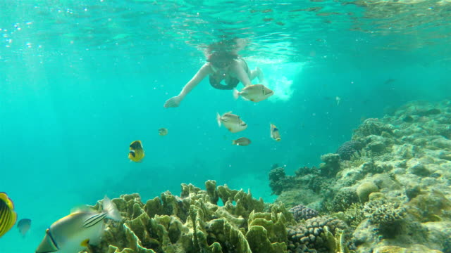 woman swims underwater in the sea. - snorkelling stock videos & royalty-free footage