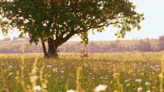 vídeos y material grabado en eventos de stock de ds mujer columpiándose en un columpio del árbol en medio de un prado - contraluz